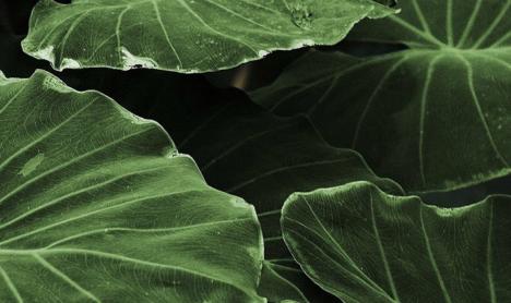 Plants - Healthy Buildings